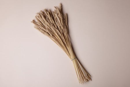 Beardless Wheat Straws - Sheath of 100 straws